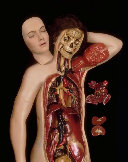 Venus anatomique, consists of 40 parts.19th century, Musée de la Faculté des Sciences de Montpellier
