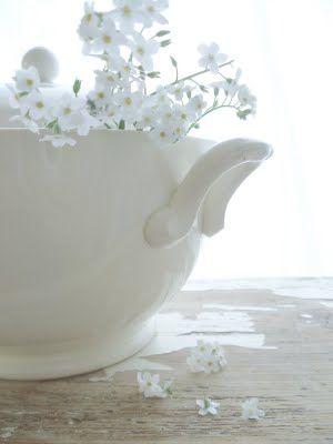 .: Whiter Shades, White Flower, Palest White, White On White, White Pure, Whisperer White, Vintage Beautiful, Blossoms, Color White