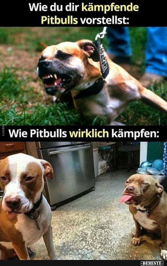 Como te imaginas luchando con los pit bulls: | Fotos divertidas, refranes, chistes, ec …   – Witzig