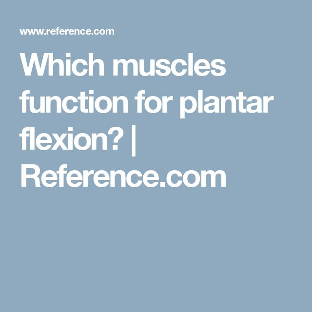 Which muscles function for plantar flexion? | Reference.com
