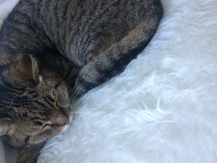 Tierd cat