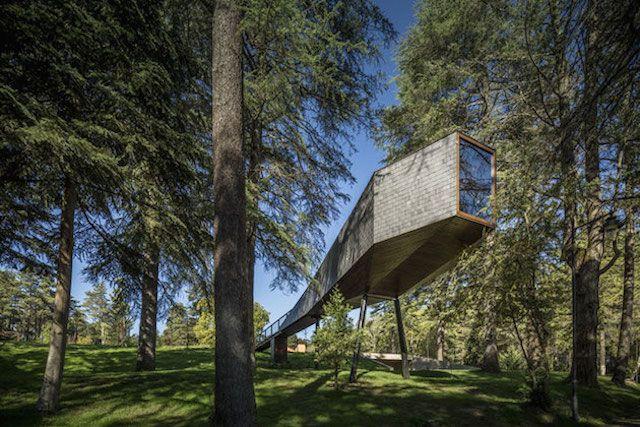 treesnakehouse-13