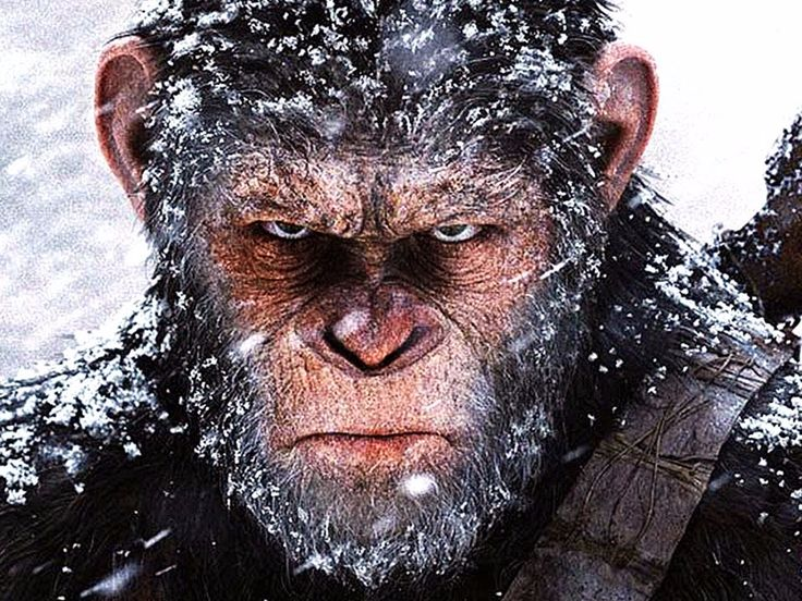 """REVIEW: 'War for the Planet of the Apes' is the darkest and most compelling blockbuster of the summer - """"War for the Planet of the Apes"""" is the sequel to 2014's """"Dawn of the Planet of the Apes."""" Caesar, played by Andy Serkis, the human-like leader of the apes, reluctantly leads his species to war with humans. They make one last stand against the apes after a virus wipes out most of mankind. Caesar will soon find out that sticking to his principles isn't so easy in the face of unimaginable…"""