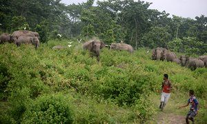 A male elephant charges Indian villagers at Kolabari, some 50km from Siliguri in West Bengal.