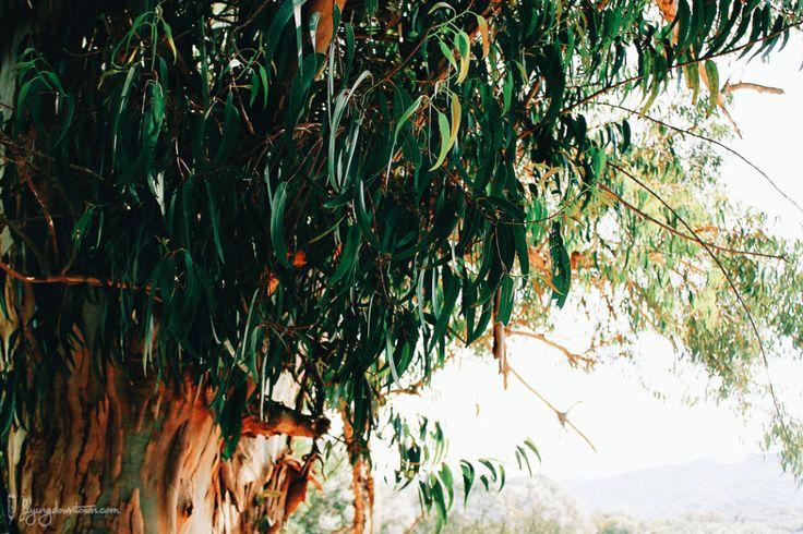 Végétation sur le site de Filitosa en Corse