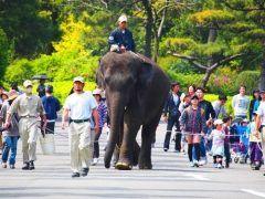 JAF宮崎支部は12月18日日に宮崎市フェニックス自然動物園で飼育員と行く動物園ガイドツアーを開催します  飼育員による園内ガイドや小動物とのふれあい体験普段は聞けない動物の生態解説など存分にお楽しみいただける内容です  参加費は通常入園料よりもお得なJAF会員限定割引料金となっていますよ  日時2016年12月18日日10:0012:00 会場宮崎市フェニックス自然動物園宮崎市塩路浜山3083-42 内容飼育員による園内ガイド動物の生態説明小動物とのふれあいなど 対象JAF会員とお連れの方1グループ 参加費入園料のみ 大人650円通常830円 中学生330円  430円 小学生240円  310円 定員名応募多数の場合抽選となります 申込方法JAF会員番号氏名電話番号人数をJAF宮崎支部へご連絡下さい 申込締切2016年12月8日木まで tags[宮崎県]