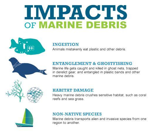 Impacts of Marine Debris: the Struggle for Marine Animals | NOAA's Marine Debris Blog
