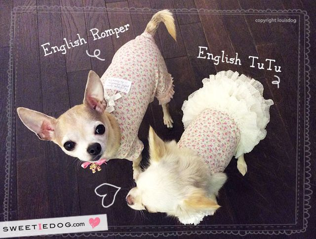Dog dress English tutu Louisdog www.sweetiedog.com #chihuahua #puppy #dog #chien #dogdress #dogclothes