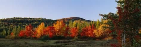 Trees in the Forest, Adirondack Mountains, Essex County, New York State, USA Wandtattoo von Panoramic Images bei AllPosters.de