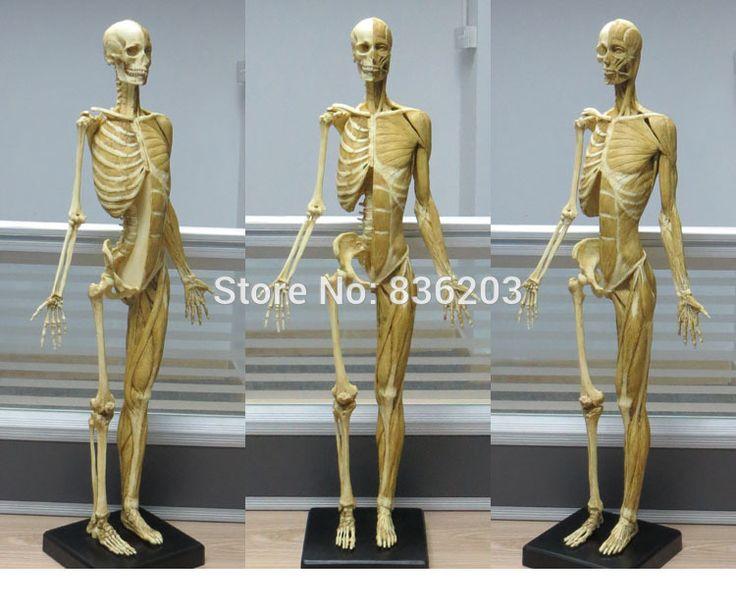 más de 25 ideas increíbles sobre skeleton for sale solo en, Skeleton