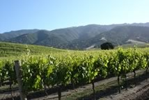 Sleepy Hollow Vineyard - Santa Lucia Highlands, CA