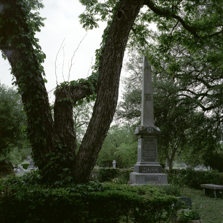 """Texas Governor Hogg asked for pecans to be grown at his grave, from my new book, """"Living Witness: Historic Trees of Texas"""" See more at livingwitness.net"""