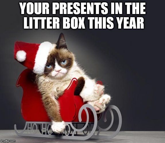 Funny Christmas Cat Meme : Top ideas about grumpy cat on pinterest