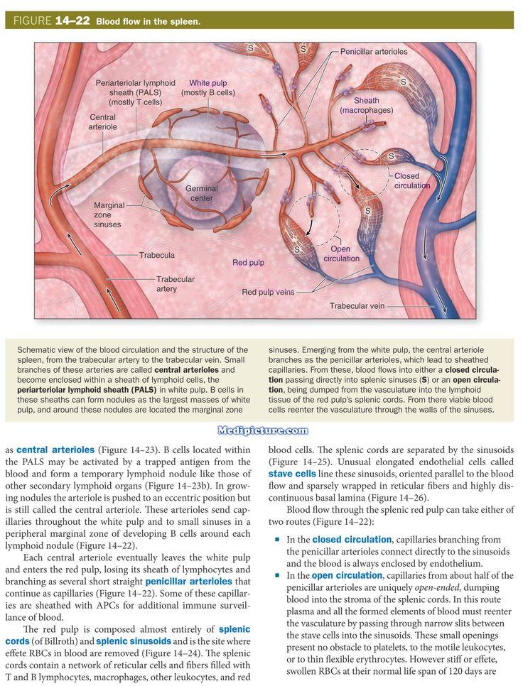 15 best Medical World images on Pinterest   Medical, Med school and ...