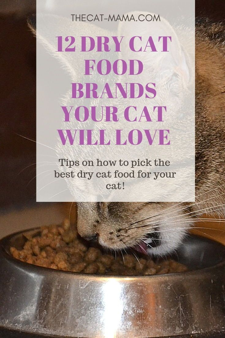 12 Best Dry Cat Food Brands To Buy For Your Cat The Cat Mama Cat Food Brands Dry Cat Food Brands Dry Cat Food