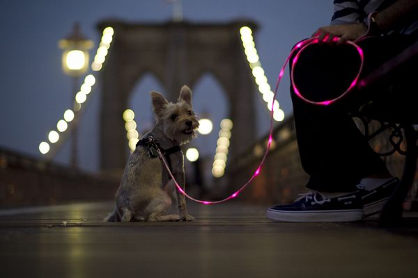 LED dog leash... I think my boys need this.