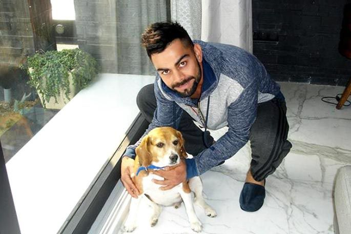 Indian Cricketers & their pets #petsworld