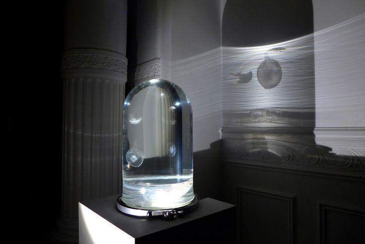 Jellyfish | The Darwin Tank