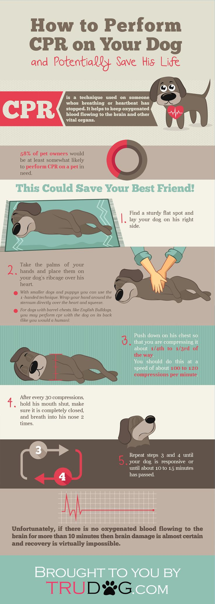 How to Perform CPR on Your Dog #petsafety #dogs #CPR