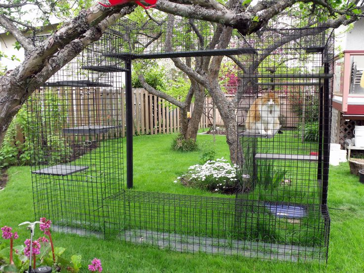 Outdoor Cat Enclosure Beautiful World Living Environments