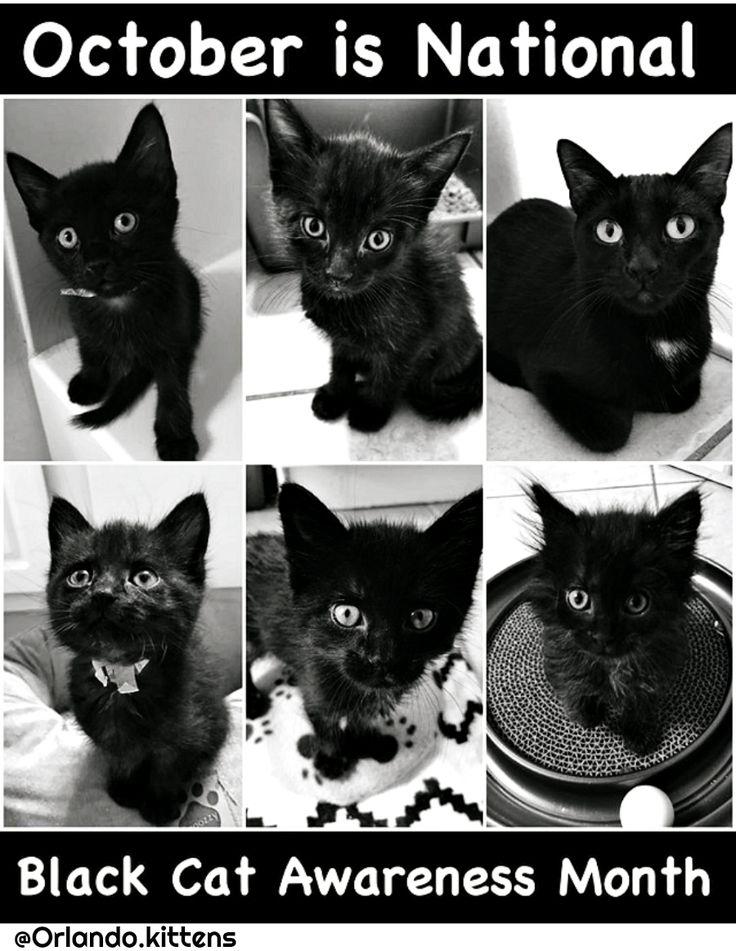 orlando.kittens_foster cute kittens for adoption  @catwisdom101
