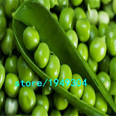 Sweet pea seed,Garden Pea seeds,vegetable seeds ,about 100 particles