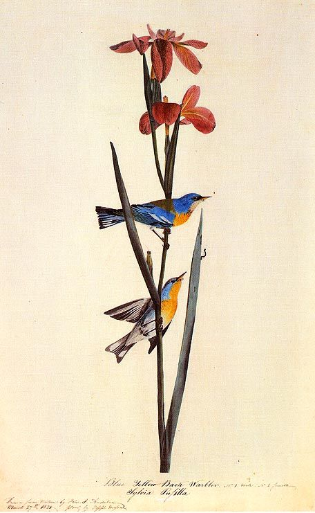 A little fun in the garden.  John James Audubon Painting