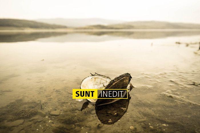 SUNT INEDIT