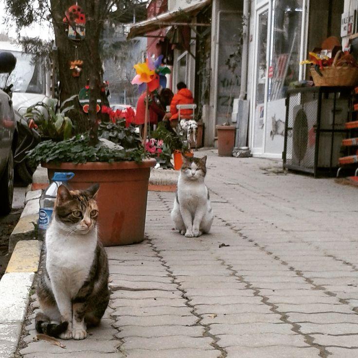 Kuzguncuk... İstanbul 'un  Kedileri..
