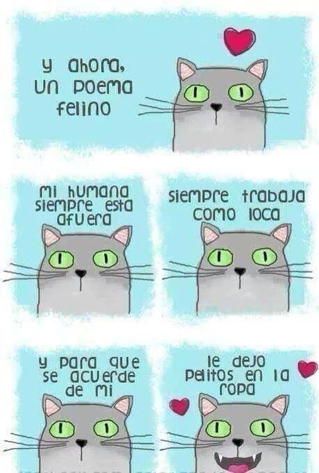 Catty poem