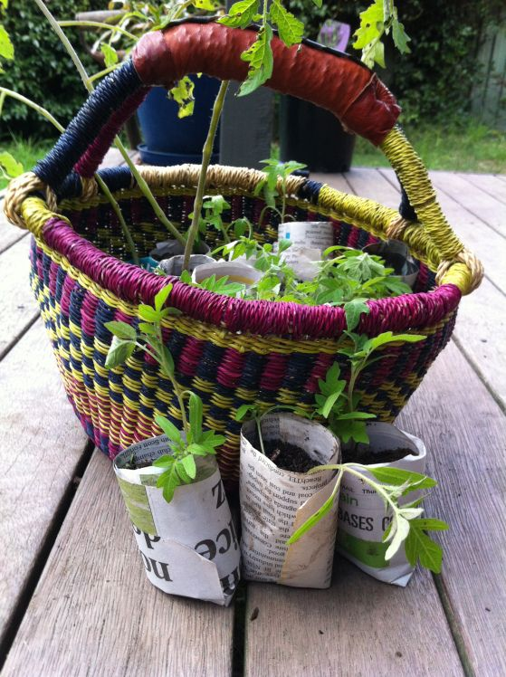 Make your own seedling pots- Burrowbee