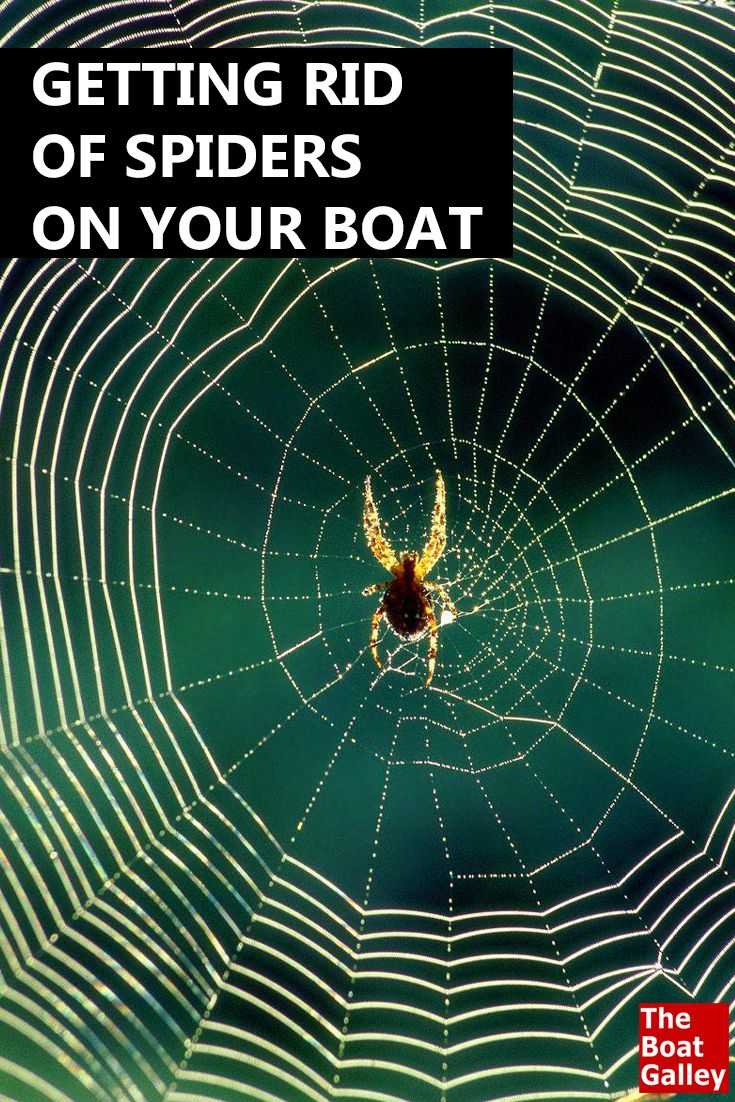 In some areas, spiders just love boats. How do you get rid of them? Here's a way one reader learned by accident. via @TheBoatGalley