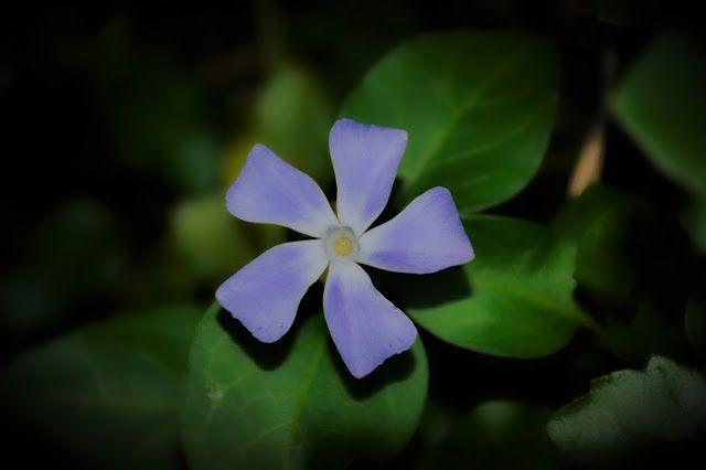 M  o   m   e   n   t   s   b   o   o   k   .   c   o   m: Light purple flower ...