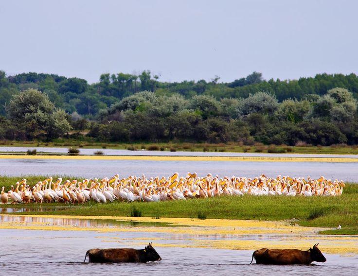 Beautiful wilderness. Danube Delta