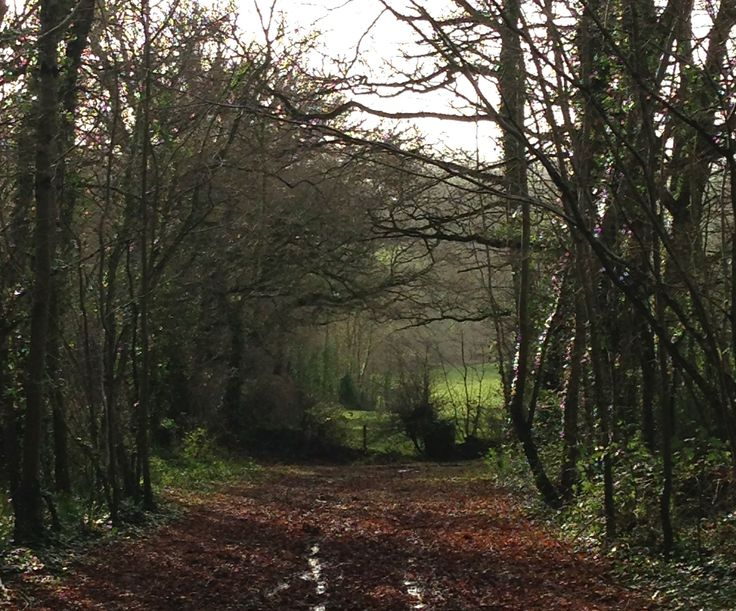 Ashclyst Forest, East Devon
