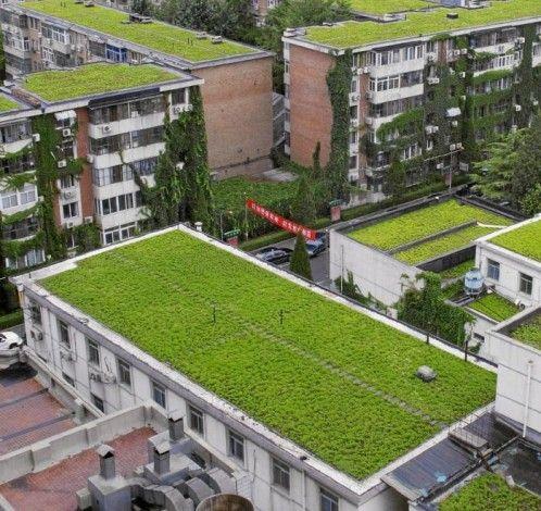 Best Ecohaus Chìa Images On Pinterest Architecture Social - A step up in amazing architecture la