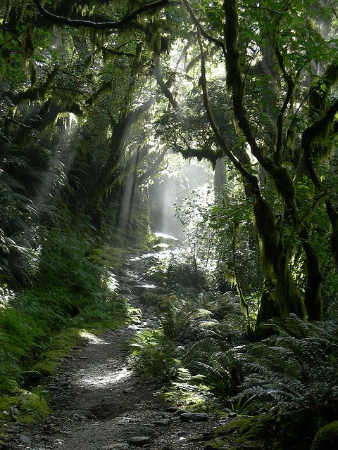The trail on the Milford Track in Fiordland National Park, New Zealand #placestogothingstosee #newzealand