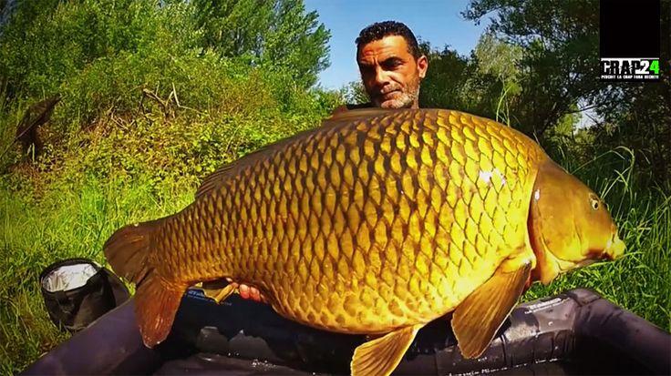 Cele mai bine de 15 minute ale filmului conțin o bună parte din ingredientele necesare unui spectacol de frumos în ceea ce privește #pescuitul la crap!  Detalii și VIDEO AICI >>> http://www.crap24.ro/dream-life-vol-2-crapi-fabulosi-pescuiti-pe-lacuri-de-poveste/