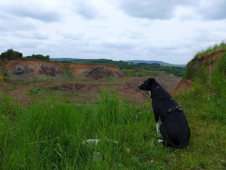 Schöne Vulkaneifel: Wanderung mit Hund rund um den Vulkan Kalem