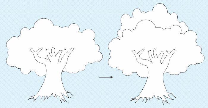 16 Sketsa Gambar Pohon Beringin