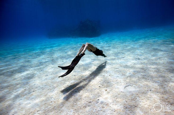 ... Vivid ...  Photo taken on one breath by Eusebio Saenz de Santamaria. #freediving #underwater #1ocean1breath #ocean #oneoceanonebreath