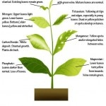 Super helpful for houseplants! - Signs Of Nutrient Deficiency