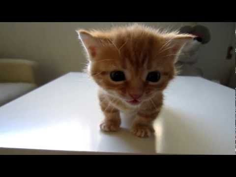 a scolded cat. please play with sound