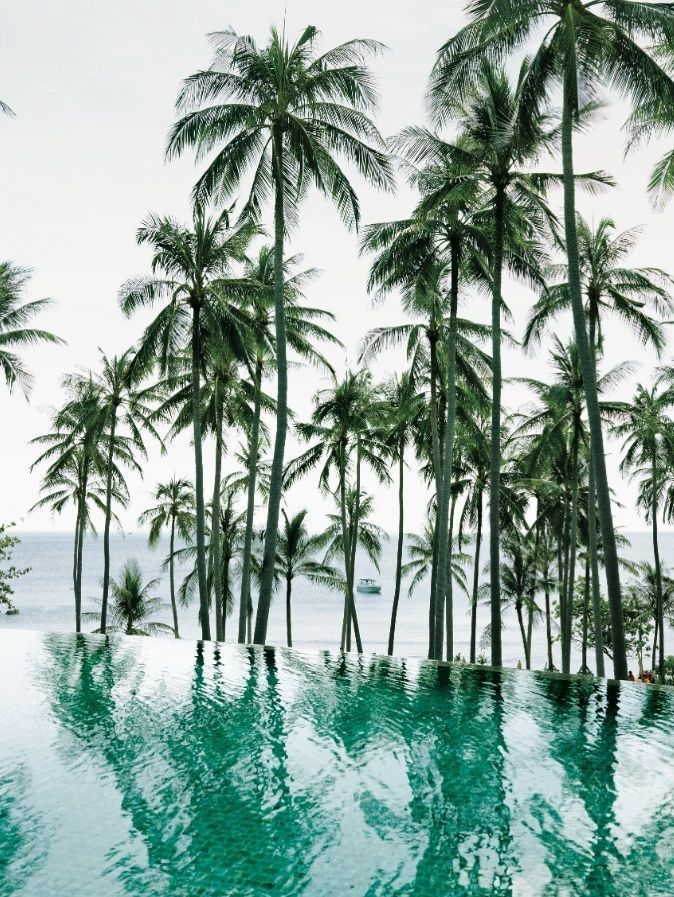 Palmtrees | Sea | Swimpool | Wanderlust | More on Fashionchick.nl