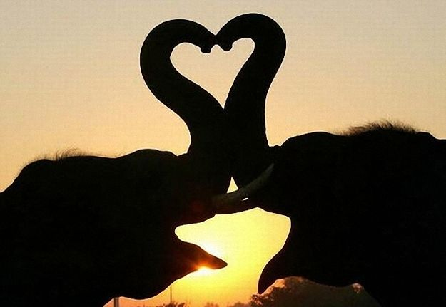 These elephants that can't help showing how they really feel.   Community Post: The 25 Most Romantic Animals That Ever Lived