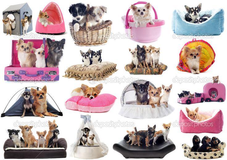 Маленькие собаки в постели — стоковое изображение #31060793