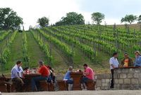Hungarian vineyards