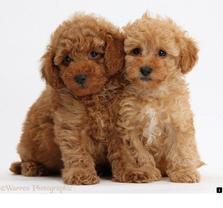 Simply Click The Link To Find Out More Dog Breeds Follow The Link