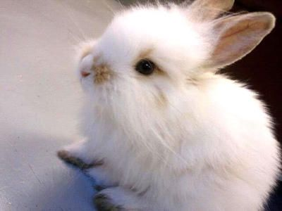 Rabbits for Adoption, Sale, Lost and Found, All Ages - PetFinder.my