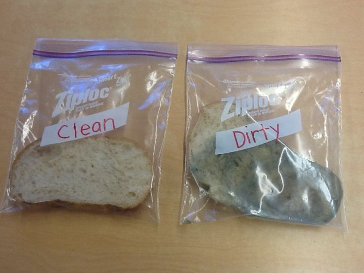 Yucky Germs! (A science experiment for kids)